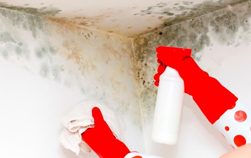 Удаление плесени со стен в квартире